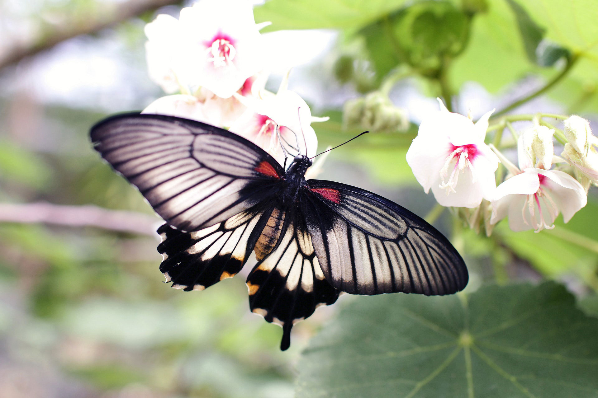 national learn about butterfly day